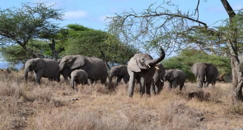 005 Tanzanie