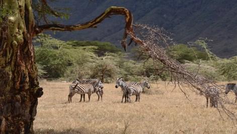014 Tanzanie