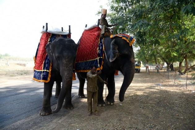 Transport en éléphant
