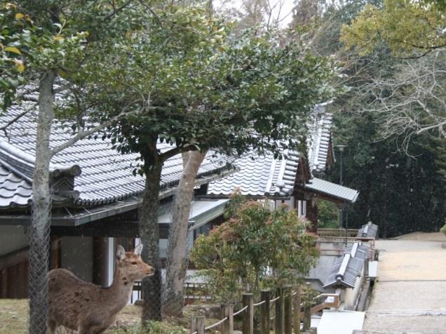 Neige à Kasuga-Taisha
