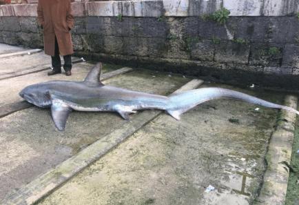 squalo-castellammare(4)