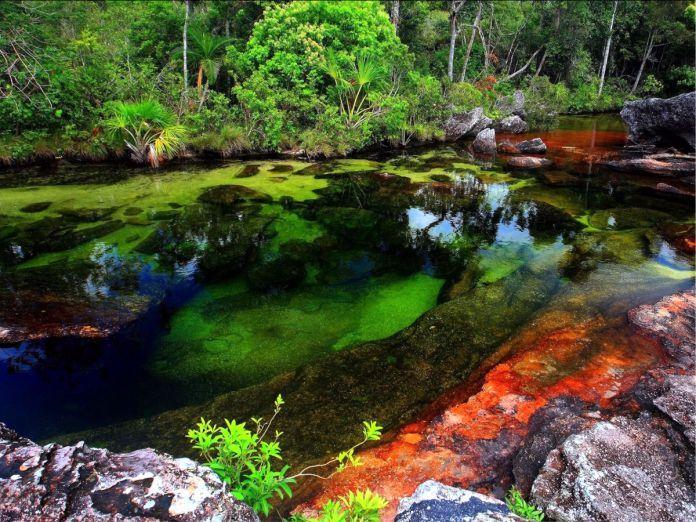 Cano Cristales - 29 de los paisajes más surrealistas de nuestro hermoso planeta