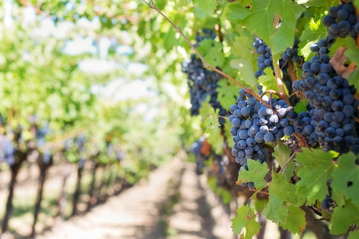 cata del barrio / cosecha 2018 DO Valdepeñas rutas del vino