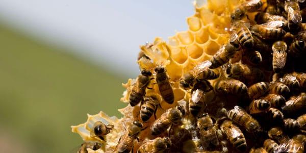 restaurante lienzo postre miel