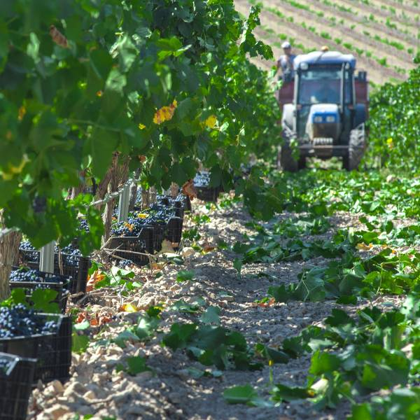 miel de uva Monastrell viñeos bodega producción mundial devino