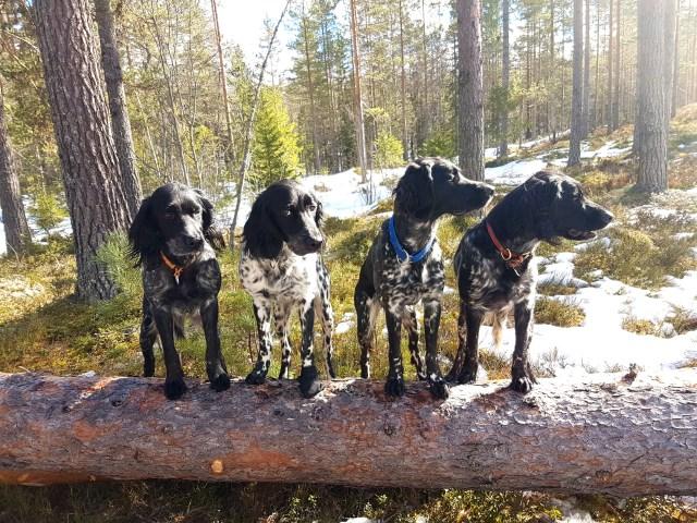 På trening  skogen