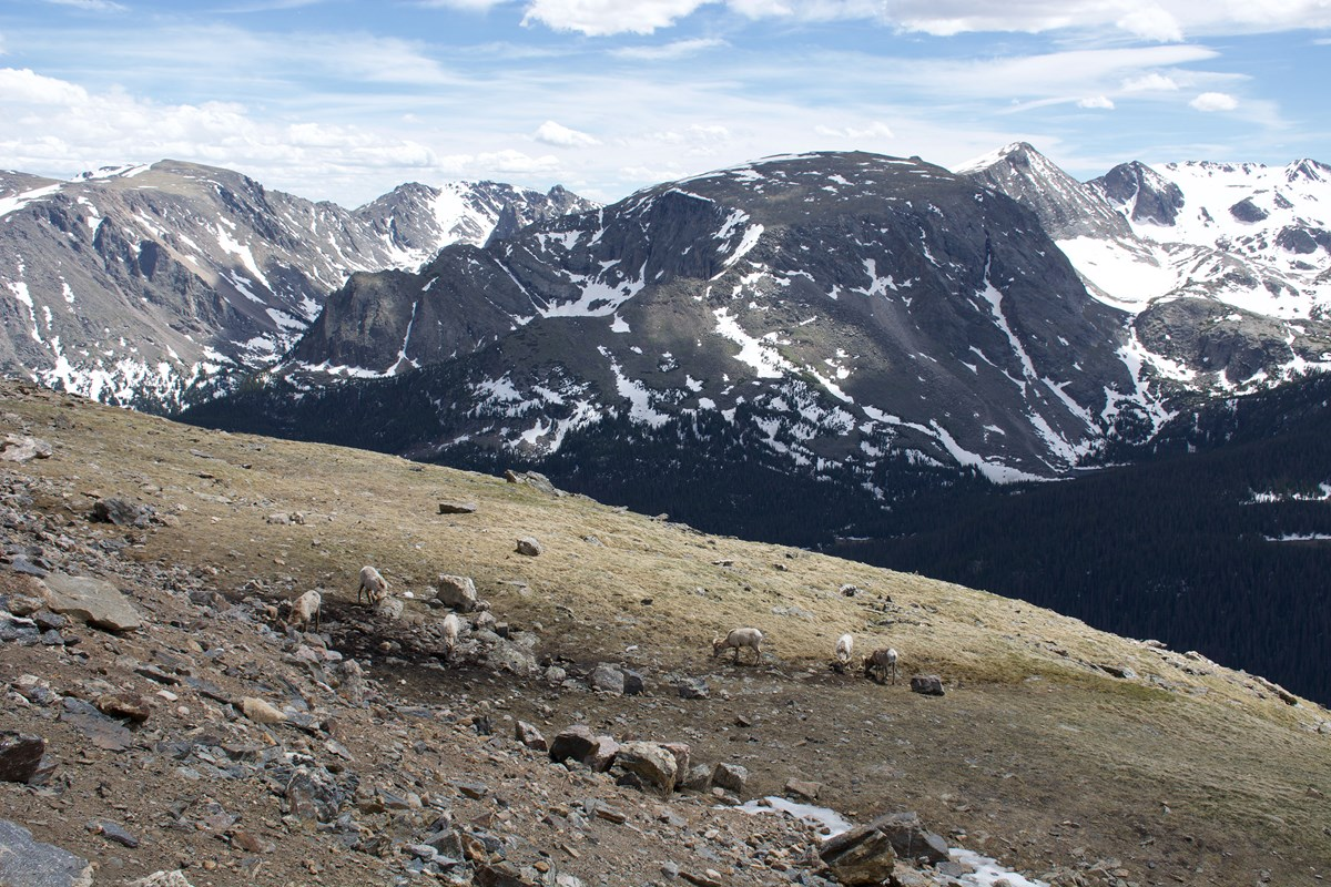 Record Visitation At Rocky Mountain National Park In