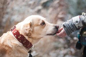 Le chien et la confiance