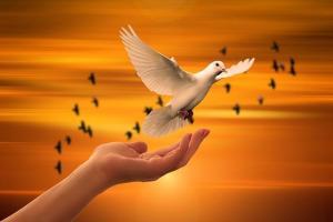 Une colombe prenant son envol