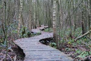 La traversée des bois sur pilotis