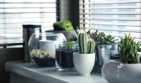 Des plantes en pot sur un coin de table