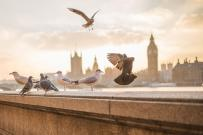 Oiseaux qui s'envolent vers des opportunités