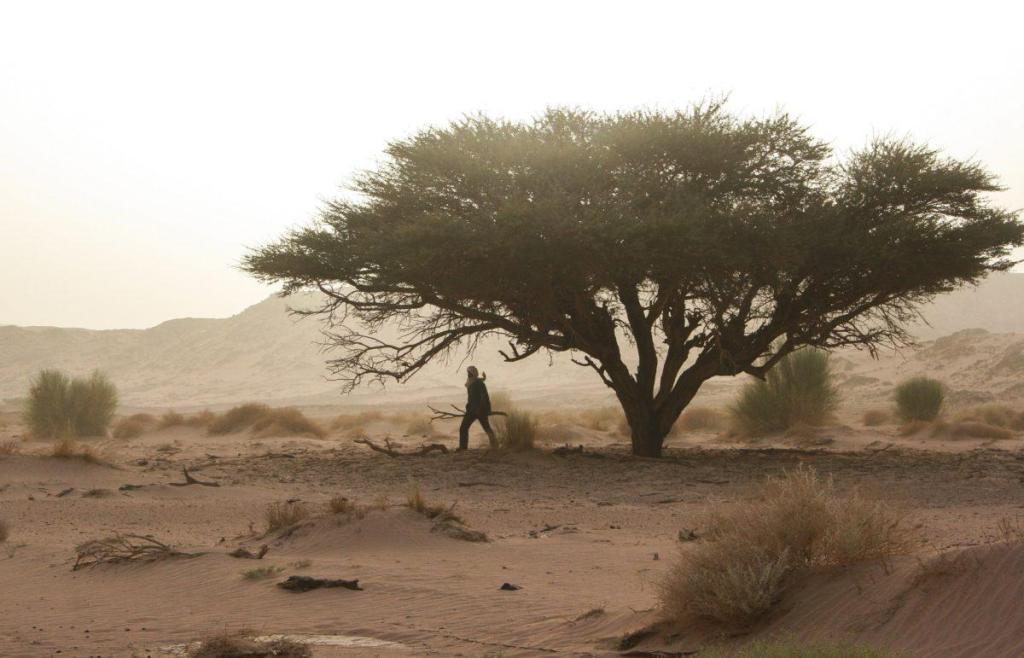 Un marabout dans le désert africain