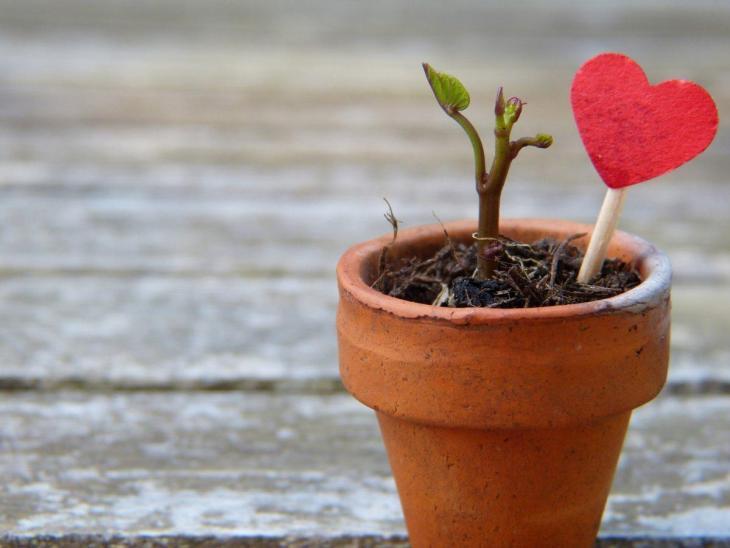 Un pot de fleur avec une fleur et un coeur