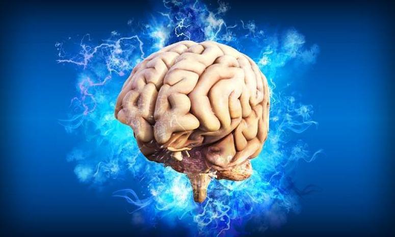 """Un cerveau qui pense en mode """"riche"""""""
