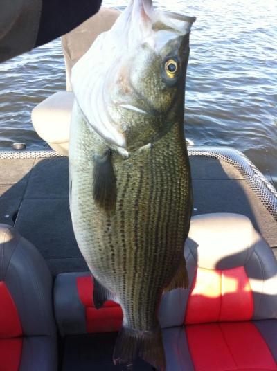 Grand Lake Bass Fishing