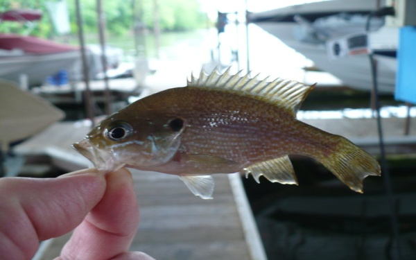 Crappie Tips & Management at Grand Lake