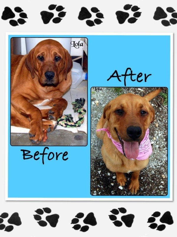 Dog adoption in Grove
