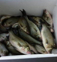 Fishing Report For July 4th Week