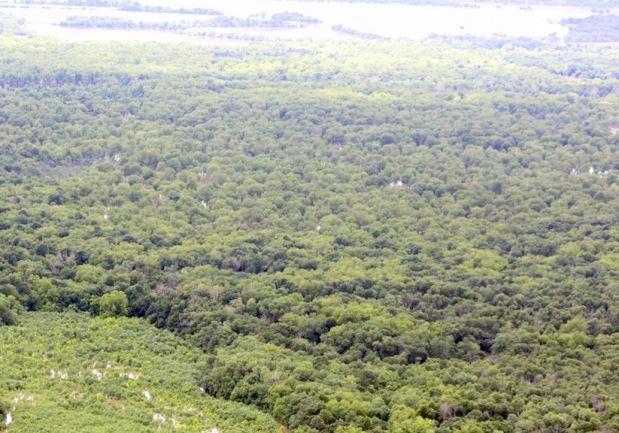 Neosho River bottom hunting land