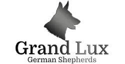 Grand Lux German Shepherd Puppies for Sale in Pennsylvania VA1 Gary vom Hühnegrab
