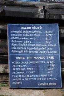 mango tree sign