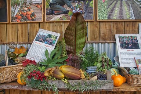 harvest display