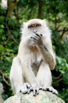 monkey at Batu
