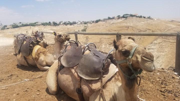 {Israel} Day 10: Ammunition Hill National Memorial, Good Samaritan Mosaic Museum, Genesis Land, & Qumran National Park