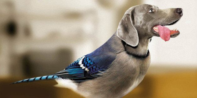 Recipe for Action: Bird-Dogging