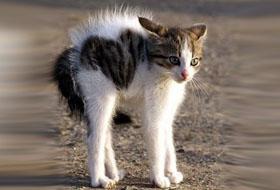 Как понять язык кошек по хвосту глазам и жестам