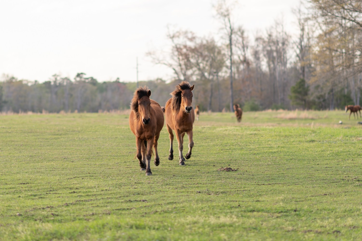 Horses running to meet us - Wildhorse at Parker Farms