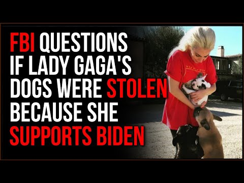 FBI Investigates If Gaga's Dogs Were Stolen Because She SUPPORTED BIDEN, This Is MAGA Country 2.0
