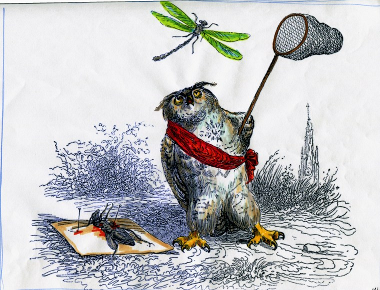 grandville-animals-046-joe-walsh-owl
