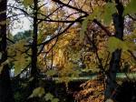 Autumn glory-2