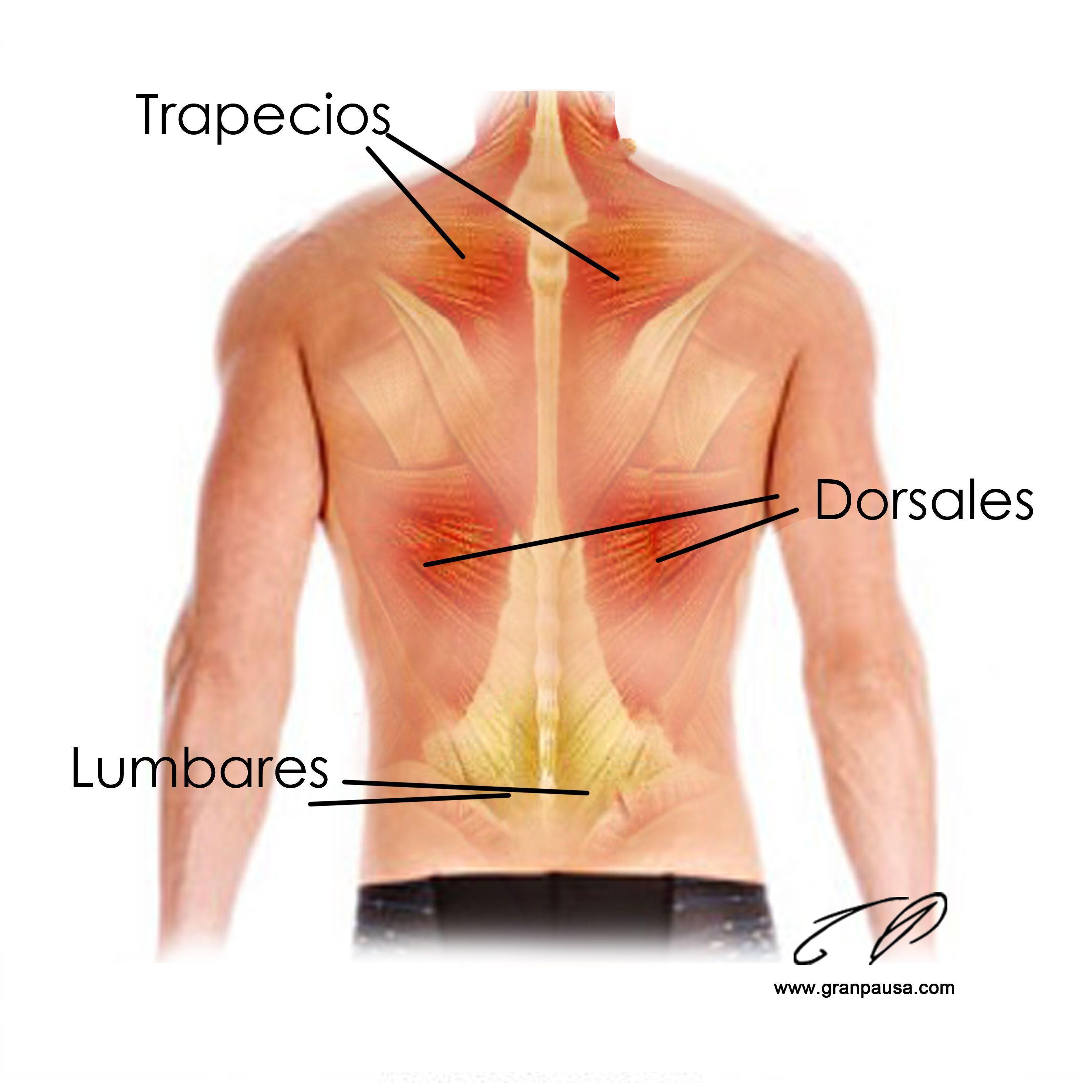 Como arreglar los dolores a la hernia sheynogo del departamento