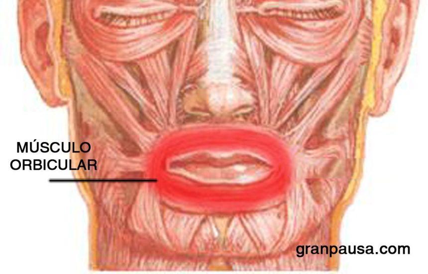 Músculo-orbicular-de-los-labios