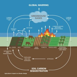 Soil carbon sequestration. Image credit: Montpellier panel