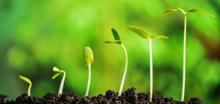seedlings optimism
