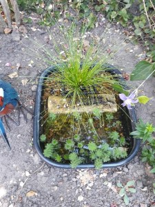 A washing up bowl pond, with lots of foliage