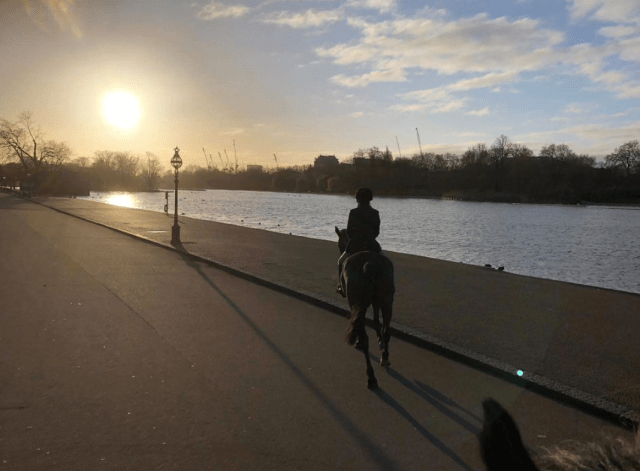A person riding a horse next to a river in a city at sunrise. There are construction cranes and trees on the other side of the river.