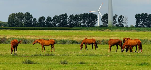 Six horses in a grassy field with trees and wind turbines in the background.