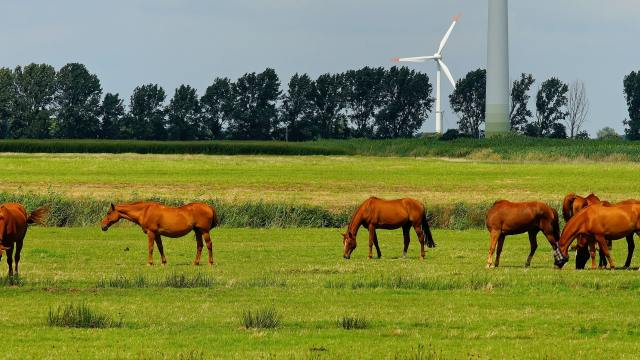 Horses standing in a grassy field with wind turbines in the background
