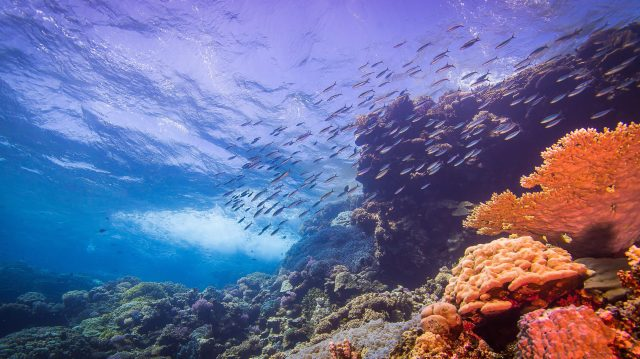 Underwater photo of a coral reef, with coral, fish and blue sky above.