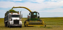 Forage Harveter blowing chopped barley into the truck