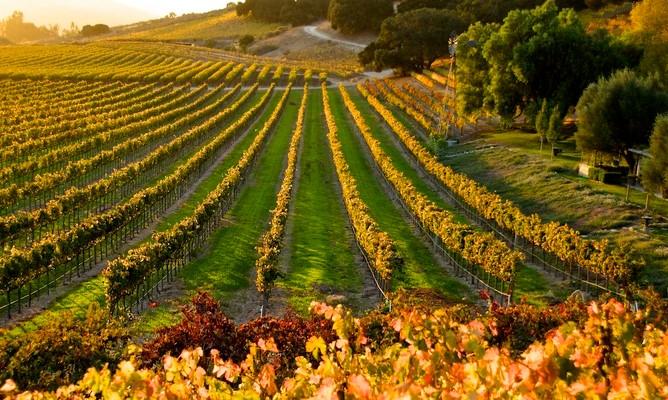 Santa Ynez Wine Trail, Santa Barbara County, California