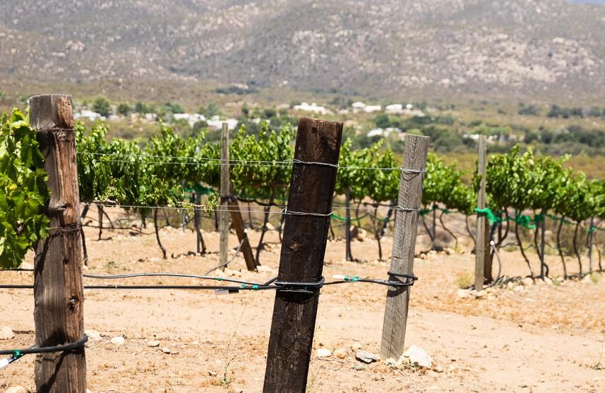 Shadow Mountain Vineyards & Winery
