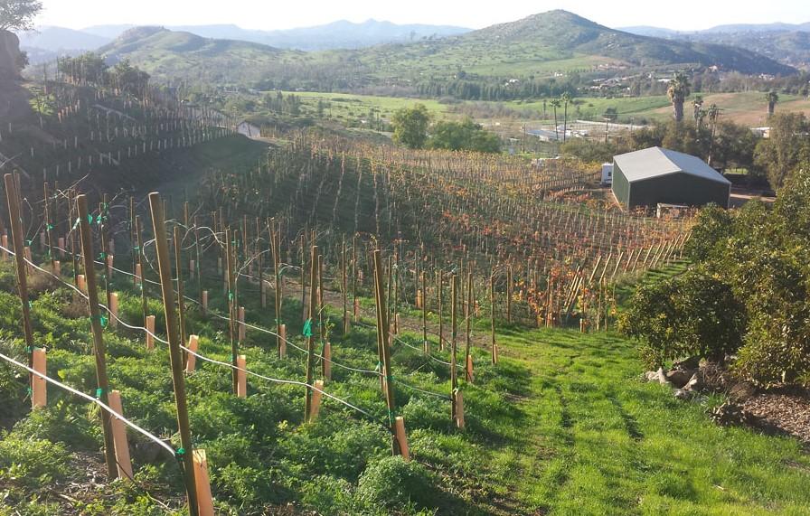 zxq vineyards