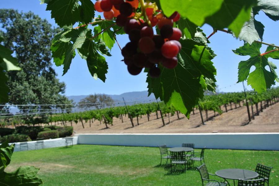 vineyard views at Gainey Vineyard