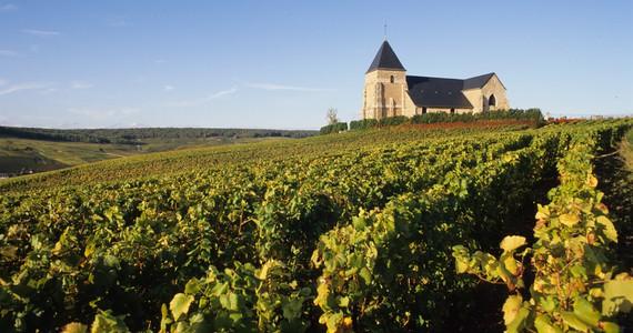 Wine tours ©JM.Lecomte